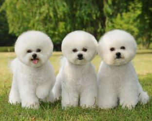 北京宠物美容创意造型课