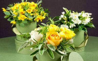 国际花艺设计师基础课程
