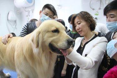 北京宠物美容综合班